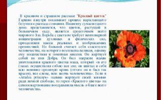 Краткое содержание книги «красный цветок» по главам (в. м. гаршин)