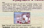 Будущее в пьесе «вишневый сад» (а. п. чехов)