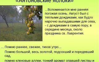 Краткое содержание произведения «антоновские яблоки» по главам (и. бунин)