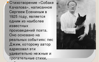 Лирика сергея есенина на примере стихотворения «собаке качалова»