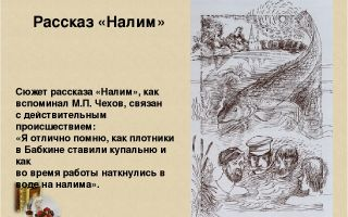 Краткое содержание рассказа «налим» (а. п. чехов)