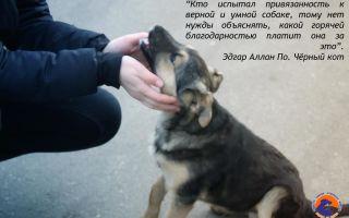 Кто испытал привязанность к верной и умной собаке, тому нет нужды объяснять, какой горячей благодарностью платит она за это